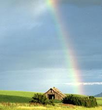 q_Rainbow