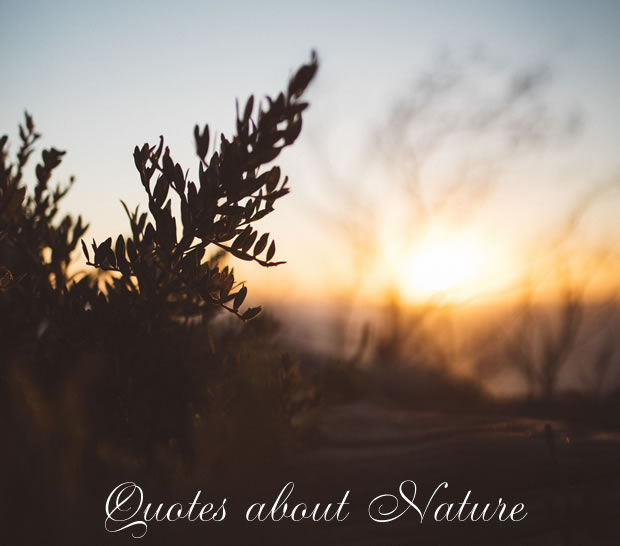 Quotes about Nature
